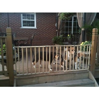 Seguridad extra grande de la puerta del perro del niño del animal doméstico Supergate extra ancha