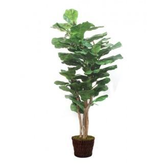 Lush Fiddle Leaf Fig Floor Tree en maceta