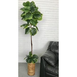 Fiddle-Leaf Fig Tree In Basket