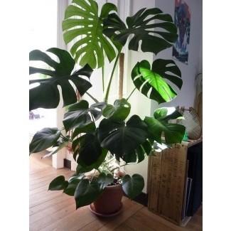 Grandes macetas de interior para plantas