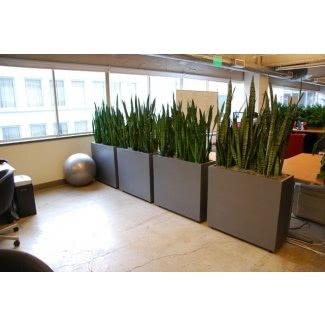 Plantas para jardineras altas